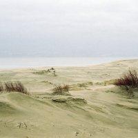 Дюны :: Саша Суфранс