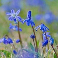весна :: Татьяна Василюк