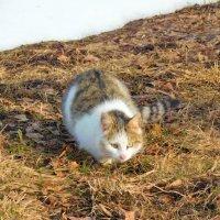 мартовский кот :: Ольга Алеева