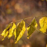 Осень :: Геннадий