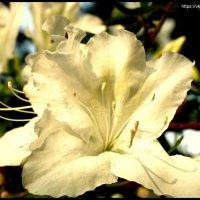 Цветы Ботанического сада :: Анна Янн