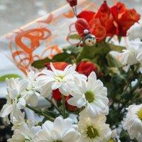 Хризантемы :: sorovey Sol
