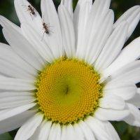догонялки !  из  жизни  насекомых. :: Ivana