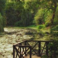 покой старинного пруда :: mig-2111 Новик