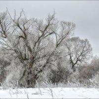 дерево :: Valentin Valentin