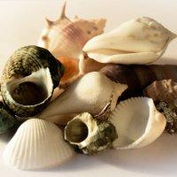 Shells :: Rina .