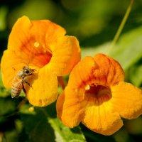 Пчёлка и мурашка :: Александр Деревяшкин
