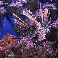 Подводный мир. :: Маргарита ( Марта ) Дрожжина