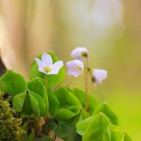 весна :: Владимир Князев