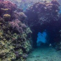 подводный мир :: Адик Гольдфарб