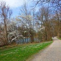 И вновь весна на белом свете!!!!! :: Galina Dzubina