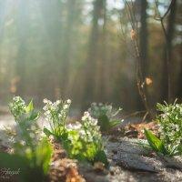 Сказочный лес :: Светлана Нощик