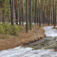 Тает снег в лесу :: Дмитрий Конев