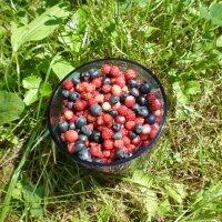 Лесные ягоды :: Алёна Савина