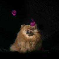 ЦВЕТЫ В СТУДИЮ! :: Наталья Краснюк