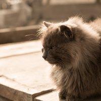 Бродяга кот :: Евгений Гречкин
