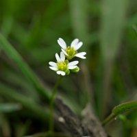 Маленькая весна. :: владимир