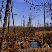 весеннее болото :: Александр Прокудин