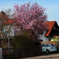 Пришла весна ... :: Владимир Икомацких