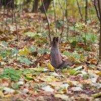 Осень в парке :: Михаил Юрьевич