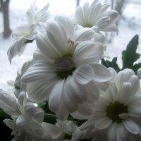 Хризантемы :: Елена Семигина