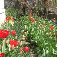 Весна в моем саду ! :: НаталиЯ ***