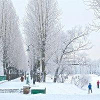светлые зимние деньки :: Елена