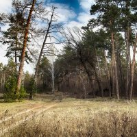 Апрельский лес :: Андрей Ветров