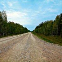 Осенняя дорога :: Александр Смольников