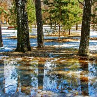 Весна в парке городском... :: НАТАЛИ natali-t8