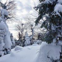 Там снега было по пояс! :: Светлана Игнатьева