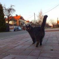 кот, который гуляет сам по-себе :: Александр Прокудин