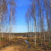 О, весна без конца и без краю... :: Mari Kush