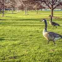 Прогулка в парке :: Лёша