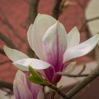 Пришла весна! :: Игорь Хижняк