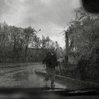 Случайный кадр :: Наталья Одинцова