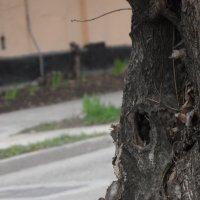 И у деревьев есть лица.. :: ALEX MAK