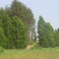 У деревни Тюшино :: Виктор Мухин