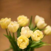 Тюльпаны :: Марина Семенкова