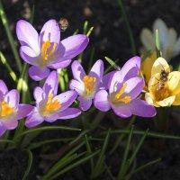 Солнечный апрель... :: Tatiana Markova
