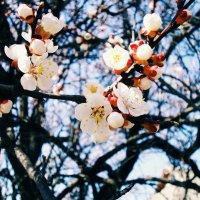 Весна :: Мария Белогурова