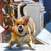 осторожно,злая Собака! :: Paparazzi