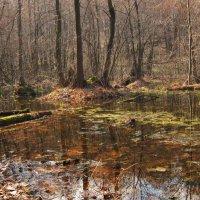 Тропинками через болото. :: Лена Минакова