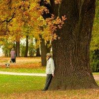 в осеннем парке... #7 :: Андрей Вестмит
