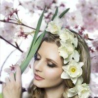 О весне, о нарциссах и яблоневом цвете :: Наталья