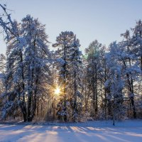 Вечерело зимним днем :: Алёнка Шапран