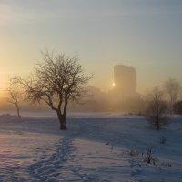 морозное утро :: Елена