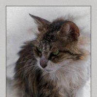 Маркиза из Петах Тиквы-2-из серии Кошки очарование мое! :: Shmual Hava Retro