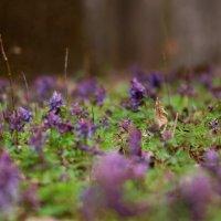 Весна :: Ирина Сивовол