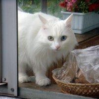 Кот на соседском балконе :: Елизавета Успенская